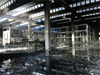 Fire Does Not Affect Bianchi Production